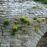 Eget foto. Ringmuren i Visby.