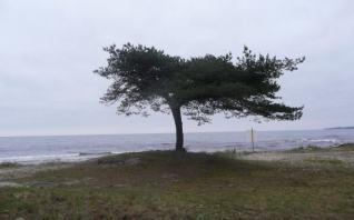 Eget foto. Strand I Skåne